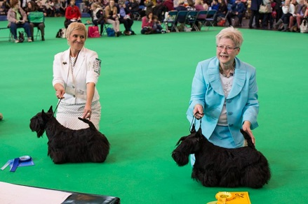 crufts 2015 Filisite Brash Kingly Step