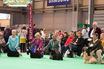 crufts part of the Open class